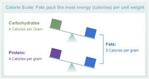 calorie fat protein carb